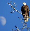 The Eagle Has Landed by Larry Ricker