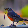 The Early Bird by Bill Cannon