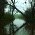 If A Tree Falls by Michael DeBlanc