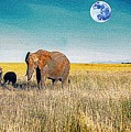 The Elephant Herd by Celestial Images