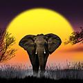 The Elephant by Nasser Osman