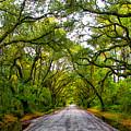 The Emerald Forrest by Carol Ward