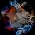English Rose At Dawn by Thom Zehrfeld