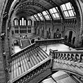 The Escher View by Martin Williams