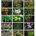 The Essential Thai Garden II by Dennis R Bean