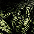 The Exotic Dark Jungle by Jorgo Photography - Wall Art Gallery