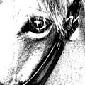 The Eye Of The Horse by Donna Thomas
