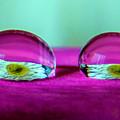 The Eye Of The Petal II by Wolfgang Stocker
