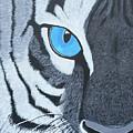 The Eye Of The Tiger by Samantha Zaltowski