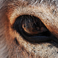 The Eye Of A Burro by Kyle Hanson