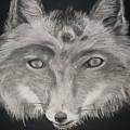 The Face Of A Fox by Samanta Munguia