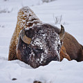 The Face Of Cold by Greg Norrell