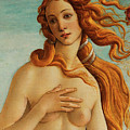 The Face Of Venus by Sandro Botticelli