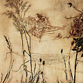 The Fairy's Tightrope From Peter Pan In Kensington Gardens by Arthur Rackham