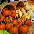 The Fall Harvest Is In Kendall Square Farmers Market by Toby McGuire