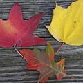The Fallen Leaves Of Autumn by Dora Sofia Caputo Photographic Design and Fine Art