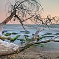 The Fallen Tree by Tihomir Dimitrov