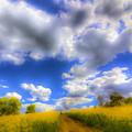 The Farm Art Vista by David Pyatt