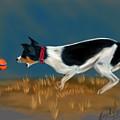 The Fetch  by Becky Herrera