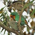 The Finch Family  by Olga and Robert W Hamilton Jr
