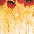 The Fleeting Nature Of Poppies by Helvi Smith