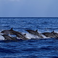 The Flight Of The Spinner Dolphin by Jackson Kowalski