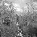 The Florida Trail by David Lee Thompson