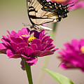 The Flower And Butterfly by Chad Davis