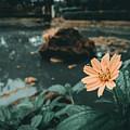 The Flower by Jogim Decilos