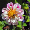 The Flower Keeper by Elizabeth Dow