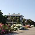 The Flowers At The Battery Charleston Sc by Susanne Van Hulst