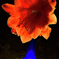 The Flower Of Cactus In A Blue Vase. by Alexander Vinogradov