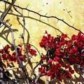 The Flowers Of Carmel 2 by Alan Hausenflock