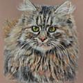 The Fluffy Feline by Terry Kirkland Cook