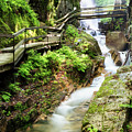 The Flume Gorge Lincoln New Hampshire by Dawna Moore Photography