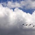 The Flying Beetles by Angel Ciesniarska