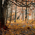 The Forest Floor by CA Johnson