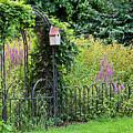 The Forgotten Garden by Alan L Graham