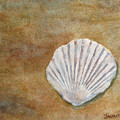 The Fossil Shell by Jenny Armitage