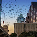 The Frost Bank Tower Stands Guard As 1.5 Million Mexican Free-tail Bats Overtake The Austin Skyline As They Exit The Congress Avenue Bridge by Austin Welcome Center