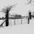 The Frozen Gate Black And White by Cathy  Beharriell