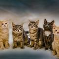 The Gang by Steven Richardson