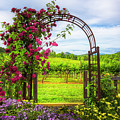 The Garden At The Winery by Debra and Dave Vanderlaan