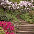 The Garden Steps by Susan Rissi Tregoning