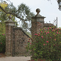 The Gate At Boone Hall by Roger Potts