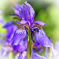 The Gentleness Of Spring 5 - Vignette by Steve Harrington