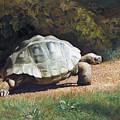 The Giant Tortoise Is Walking by Svitozar Nenyuk
