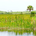 The Glades by Marilee Noland
