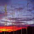 The Glow by John Hartman