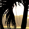 The Glow Of Maui by Chris Brannen